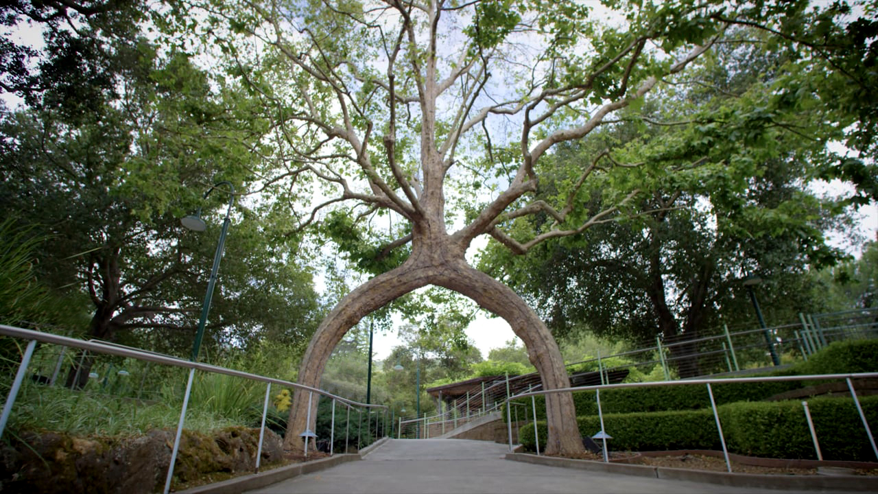 Amazing wood stories: the man who talked to trees